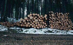 VanValkenburgh Logging