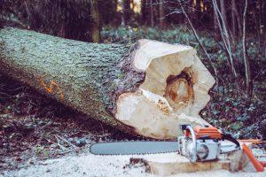 Timber Tree Service
